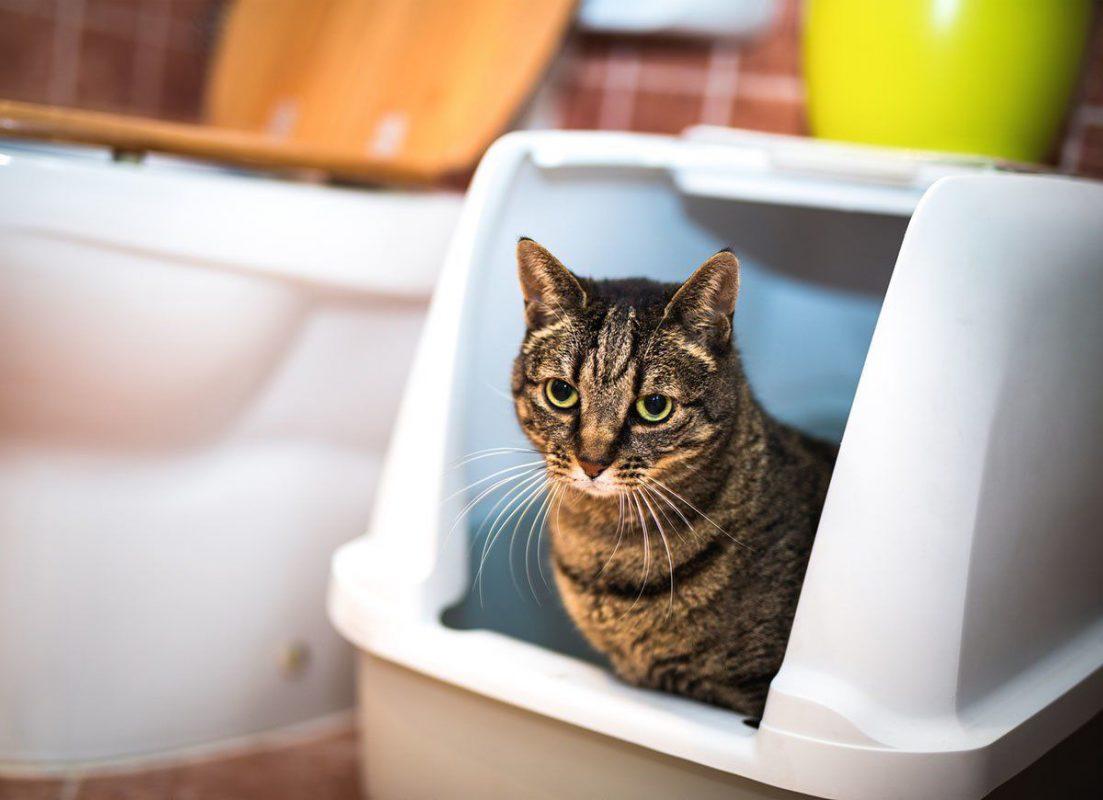 Bí quyết làm sạch mùi hôi cho mèo trong phòng hiệu quả 99%
