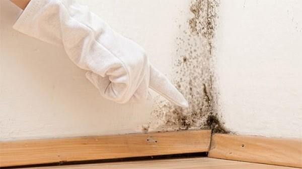 có nhiều nguyên nhân dẫn đến ẩm mốc trong phòng