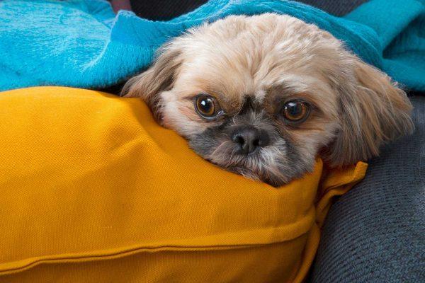 mùi của thú cưng khiến bạn khó chịu